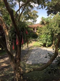 Desde el guayabo fondo casa