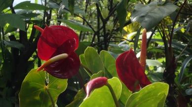 DSC02506-flores