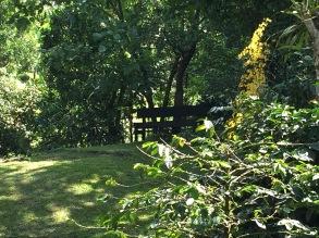 IMG_5227-jardin