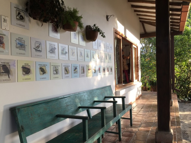 IMG_5541-terraza corredor aves